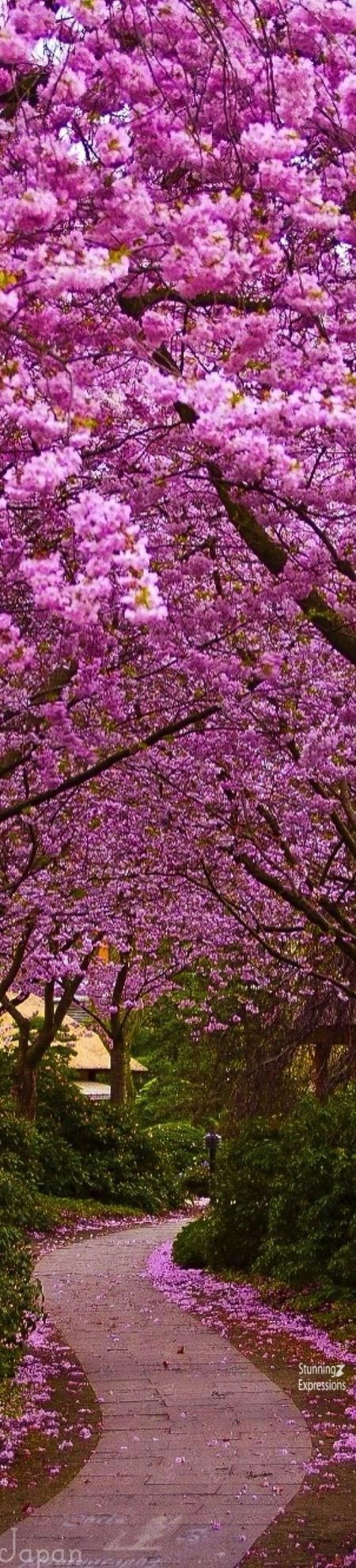 Pin By Stunning Expressions On Japan Travel In 2021 Beautiful Nature Nature Beautiful Tree