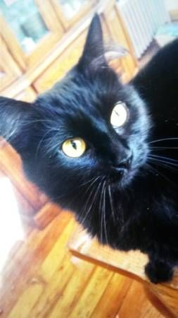 Lost Cat! (New London) 347 Pequot Ave Lost a pure black ...