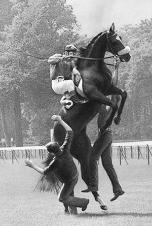 Jockey Jean Cruguet aboard a rearing horse.