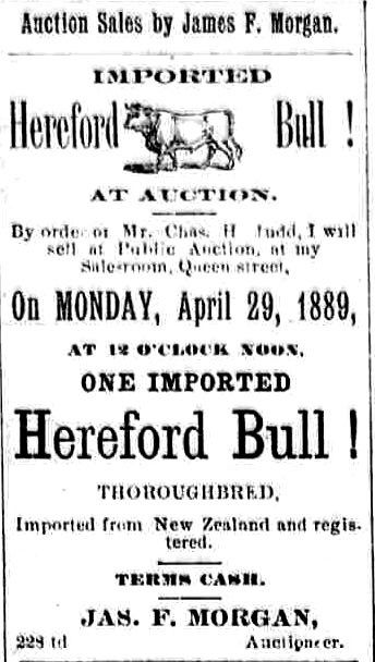 Bull Thoroughbred Library Of Congress Hereford