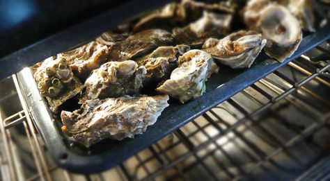 Host Oyster Roast Any Night of the Week