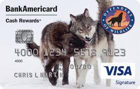 Pin On Defenders Of Wildlife Cash Rewards Visa Signature Credit Card