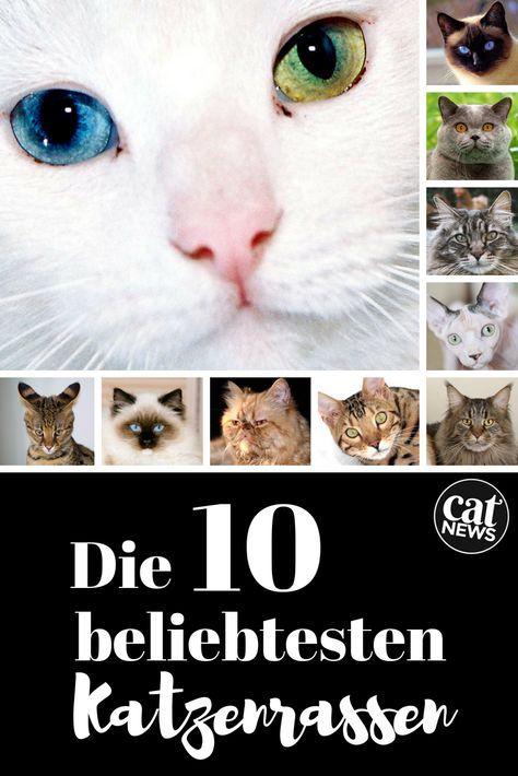Top 10 Die Beliebtesten Katzenrassen Mit Bild Katzen Rassen