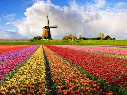 The 10 Happiest Countries In The World Tulip Fields Holland Tulips