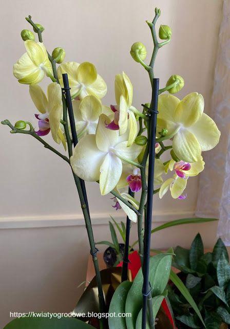 Kwiaty Doniczkowe Mozna Ustawic Rowniez Na Polkach Sciennych Plants Houseplants Flowers