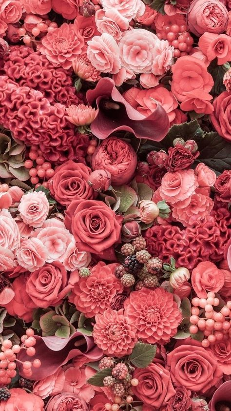 spring wallpaper hd, red and pink flowers, roses and peonies, floral phone wallpaper
