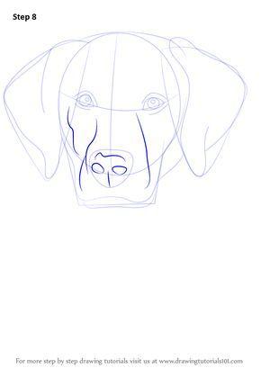 Step By Step How To Draw A Labrador Face Drawingtutorials101 Com