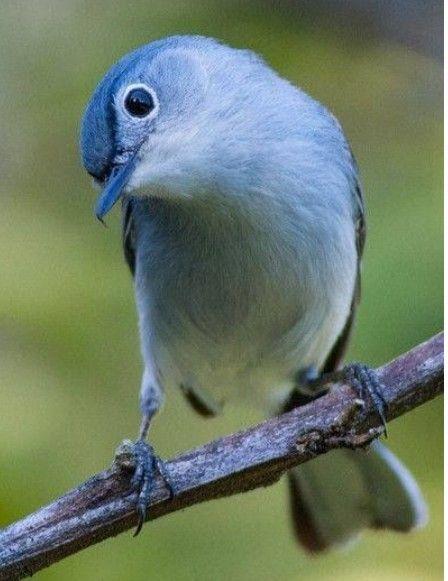 Epingle Par Celine Dubord Ebeniste Sur Oiseaux Animaux Petits Oiseaux Oiseaux Colores