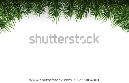 Https Www Shutterstock Com Image Vector Green Christmas Tree Branches Border On 1233864301 Src Lci Green Christmas Tree Christmas Tree Branches Tree Branches