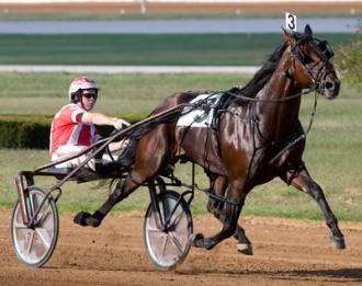 Harness World Champion Somebeachsomewhere  Euthanized  Daily