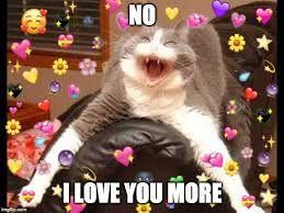 Wholesome Cat Memes Google Search Positive Memes Cat Memes Cats