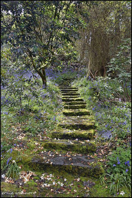 Steps in Waterford Gardens, Ireland, photo by Ernie Watchorn Beautiful Gardens, Beautiful Landscapes, Nature Aesthetic, The Secret Garden, Secret Gardens, Dream Garden, Aesthetic Pictures, Pathways, Garden Paths