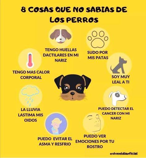 76 Ideas De Mi Perrita Cosas Para Perros Mascotas Consejos Para Mascotas