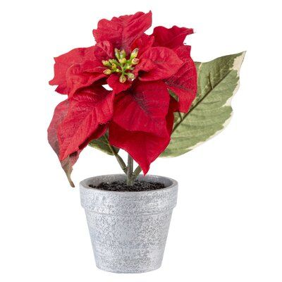 The Holiday Aisle Poinsettia Centerpiece In Pot Poinsettia Centerpiece Sunflower Floral Arrangements Christmas Tableware