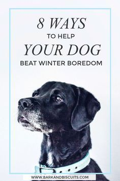 Indoor Dog Games 8 Fun Games To Play In Winter Dog Biscuits