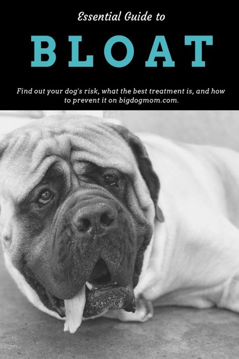 Essential Guide To Bloat 7 Simple Steps To Save Your Dog Dogs