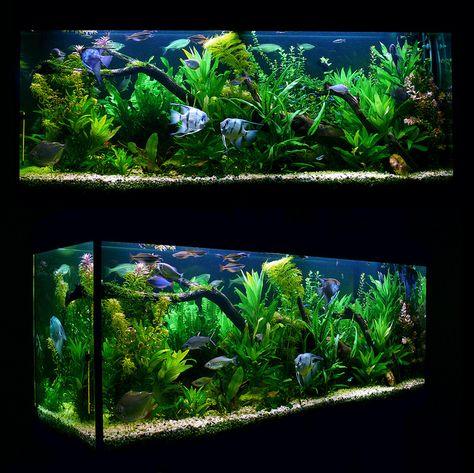ma fishtank | von vitaliilevets