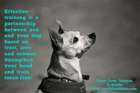 Training Is A Partnership With Images Positive Dog Training