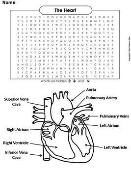 Human Body Systems Word Search The Heart And Circulatory System