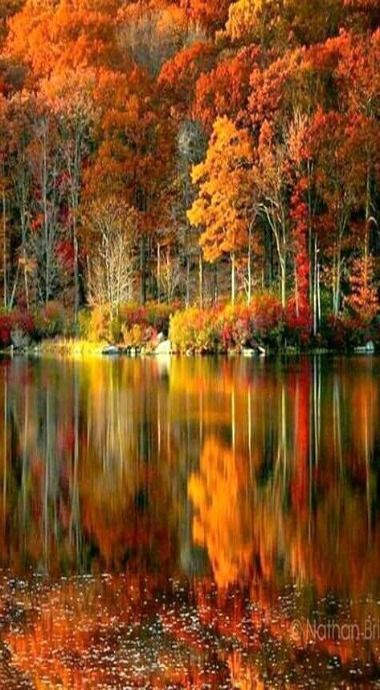 Pin By On Landscape Travel Wow Nature Fall Landscape Photography Nature Photography Trees Autumn Landscape