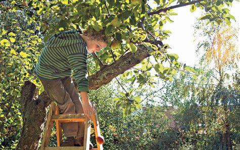 Orchards on pinterest 361 pins on fruit trees orchards and fruit garden - Spring trimming orchard trees healthy ...