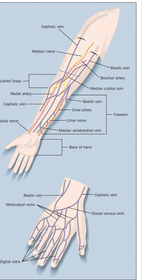 Figure 1. The superficial veins of the forearm and the hand with...