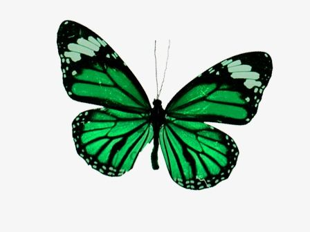 Millions Of Png Images Backgrounds And Vectors For Free Download Pngtree Butterfly Png Clip Art