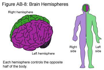 Dermatomesg 733900 neurology pinterest brain ccuart Choice Image