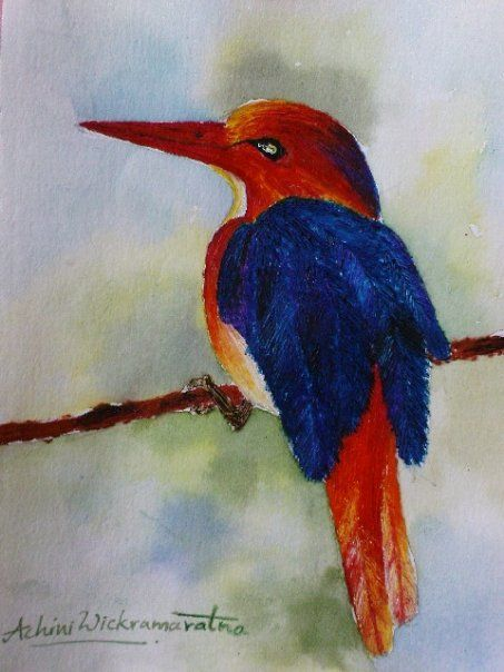 kingfisher drawn with using watercolours with images