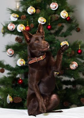 Petbarn Foundation Tree Of Hope Appeal Raised Over 1 000 000 Australian Dog Lover Pet News Pet Ownership Dog Lovers