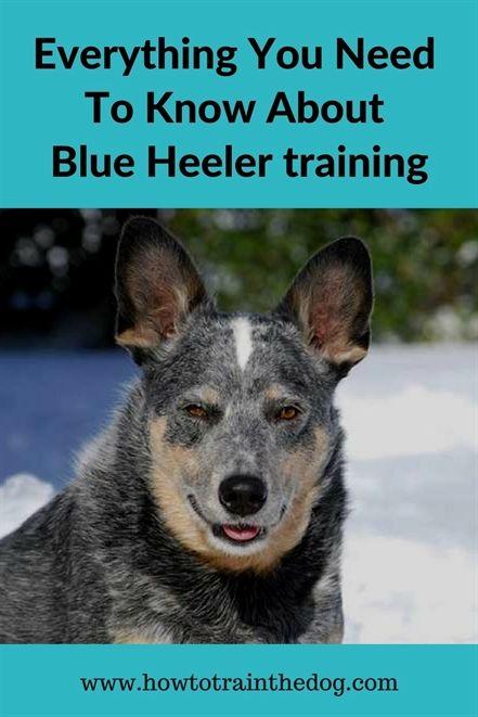 Lucky Dog Training Keller Tx Dog Training Uk Dog Training