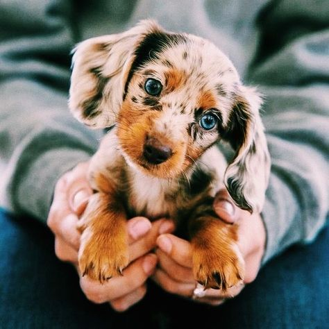 Dog And Puppies Pitbull .Dog And Puppies Pitbull Super Cute Puppies, Baby Animals Super Cute, Cute Little Puppies, Cute Little Animals, Cute Dogs And Puppies, Cute Funny Animals, Baby Dogs, Doggies, Funny Dogs