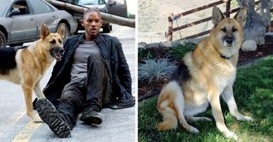 10 Years Have Passed Since The Movie Was Released And The Dog