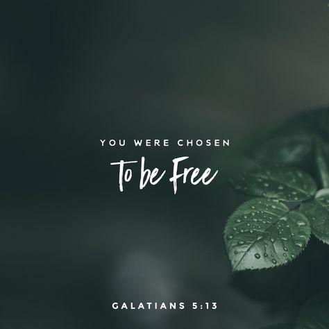 Free to love – Rebecca Brand