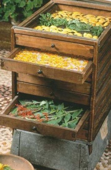 4 No Fail Methods For Drying Your Fresh Herbs Drying Herbs Medicinal Herbs Herbs