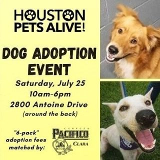 Houston Pets Alive On Instagram If You Re Looking To Adopt A Dog This Event Is For You Join Houston Pets Alive On Saturday July 25 From 10am 6pm Around T