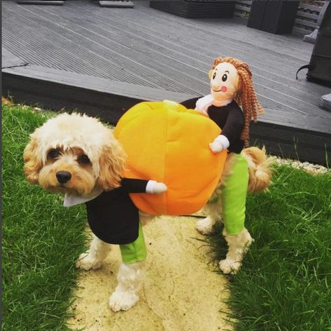 Product information It's that time of year again! 🎃  Get your pooch ready for Halloween! This hilarious eye-catching dog costume will make your dog a stand out this Halloween. Watch your doggy pal strut around getting busy for Halloween delivering pumpkins. The pet dog carrying pumpkin cosplay costume are suitable for