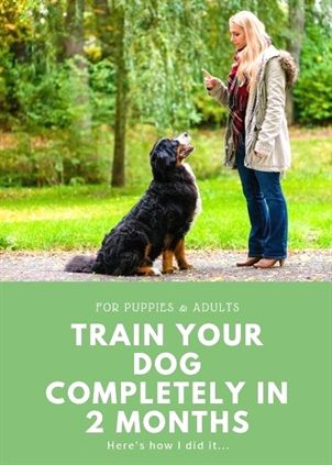 Dog Training With Some Sound Easy Tips With Images Dog
