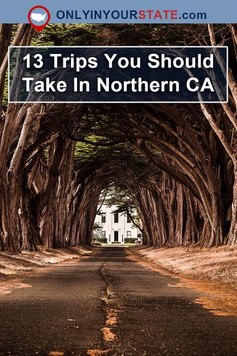 these 13 road trips through Northern California to experience some of our region's most bucket list worthy attractions. Charming small towns, magical tree tunnels, and secret waterfalls are just a few of the travel destinations. Northern California Travel, California Vacation, California Coast, Novato California, California California, California Road Trips, Murphys California, San Ramon California, Crescent City California