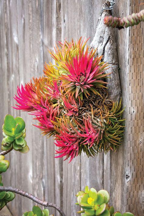 This Ever-Evolving Garden is an Air Plant Paradise - San Diego Home/Garden Lifestyles