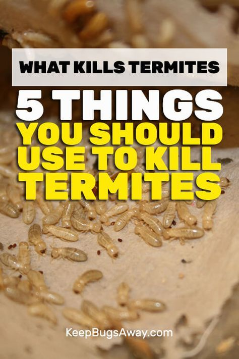 f3ff46fb6b870f510e00c3dd4577b060 - How To Get Rid Of Termites Permanently At Home