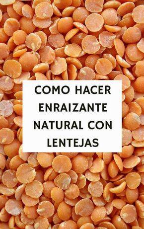 Como Hacer Enraizante Natural Con Lentejas Enraizante Natural Enraizante De Lentejas Jardin De Productos Comestibles