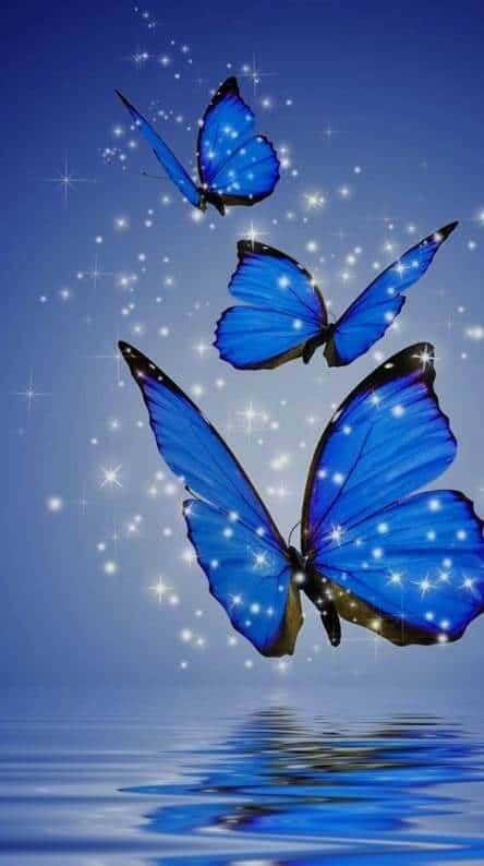 Beautiful Butterfly Wallpapers For You And All Those Who Love Them Cute Butterfly Wal In 2021 Scenery Wallpaper Wallpaper Nature Flowers Beautiful Landscape Wallpaper Blue wallpaper butterfly images hd