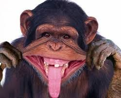 Image Result For Monkey Wearing Red Lipstick Funny Monkey