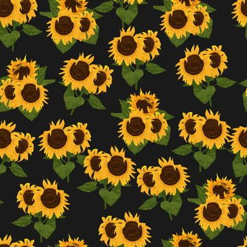 Pola Mulus Bunga Bunga Matahari Bunga Matahari Ilustrasi Pola Pola