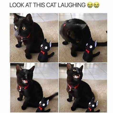 Funny Cat Memes Of The Day – 35 Pics Ep18 - Lovely Animals World #catmemes #meme #memes