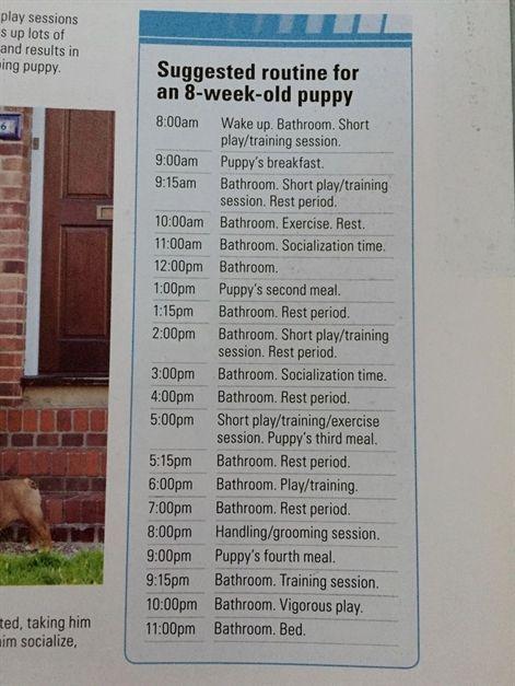 Dog Training Collar Shock Dog Training Urine Spray Dog Training