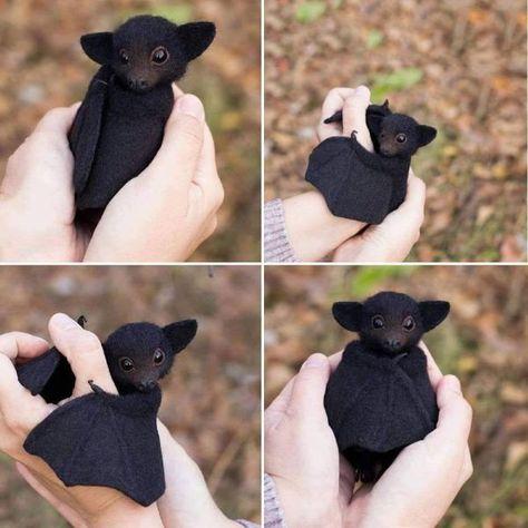 Photo of Baby Bat Plushie