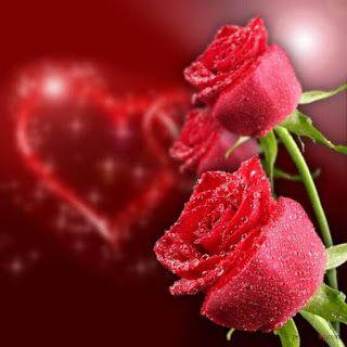 صور ورد وقلوب بوستات حب و رومانسية للفيس بوك Beautiful Roses Rose Poems Flower Garden Design