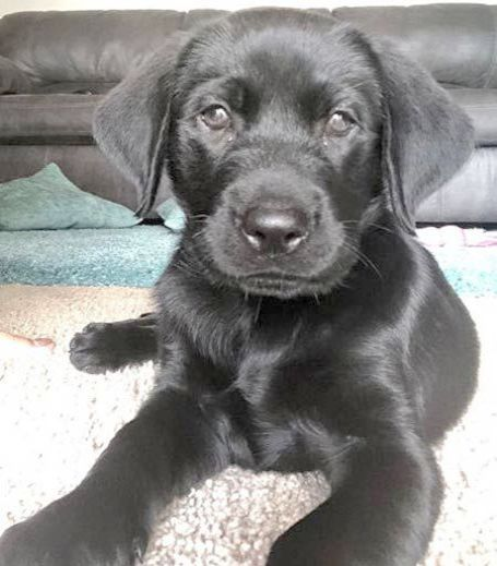 Cute Ocean Animals Coloring Pages It Is Dog Breeders Puppies For Sale Victoria Cute Animals To Draw For Mother S Day Thr Lab Puppies Black Lab Puppies Puppies